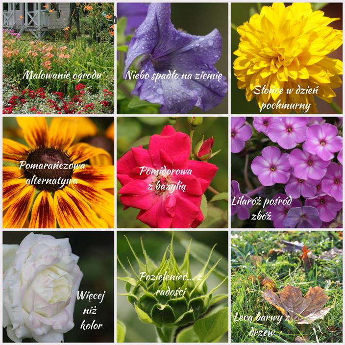 barwy w ogrodzie - spis treści