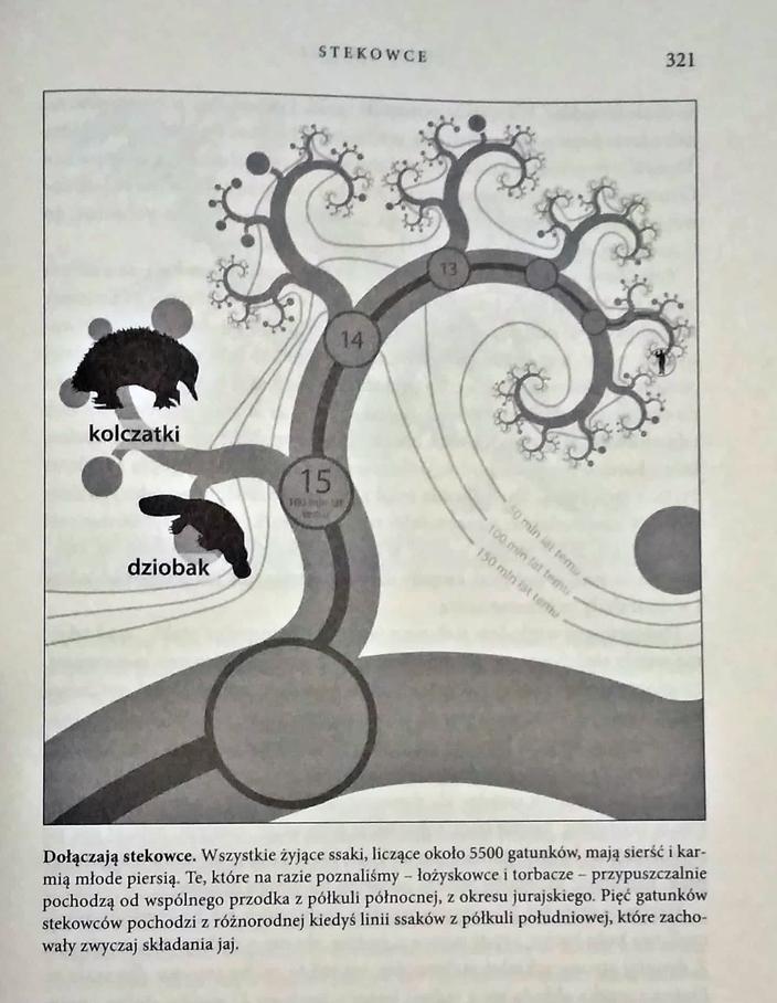 opowiesc-przodka-klad Opowieść przodka. Richard Dawkins & Yan Wong