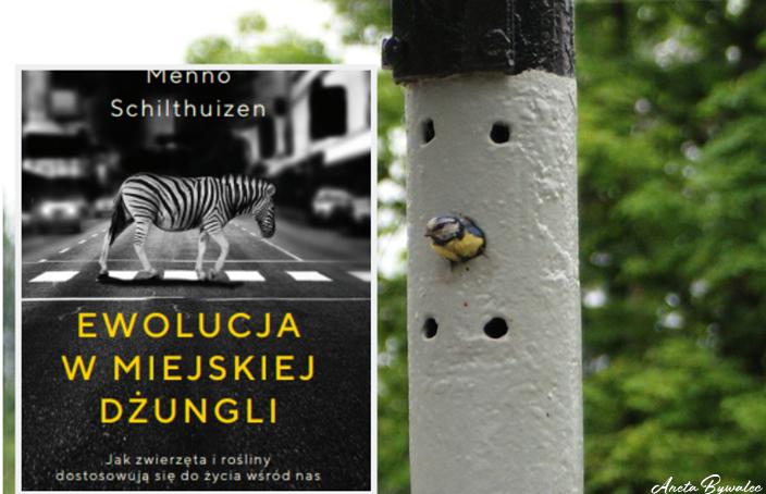 Ewolucja w miejskiej dżungli - Menno Schilthuizen