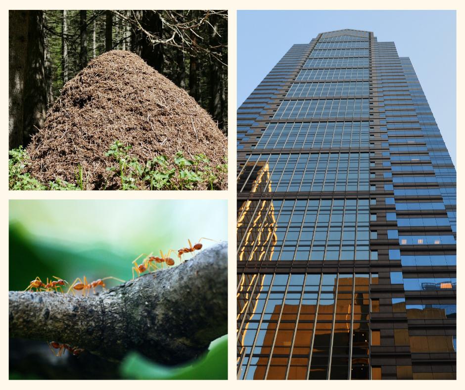 ewolucja-w-miejskiej-dzungli-mrowisko Ewolucja w miejskiej dżungli - recenzja