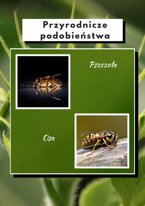 ubr-1 100 faktów o polskiej przyrodzie, które mogą Cię zaskoczyć