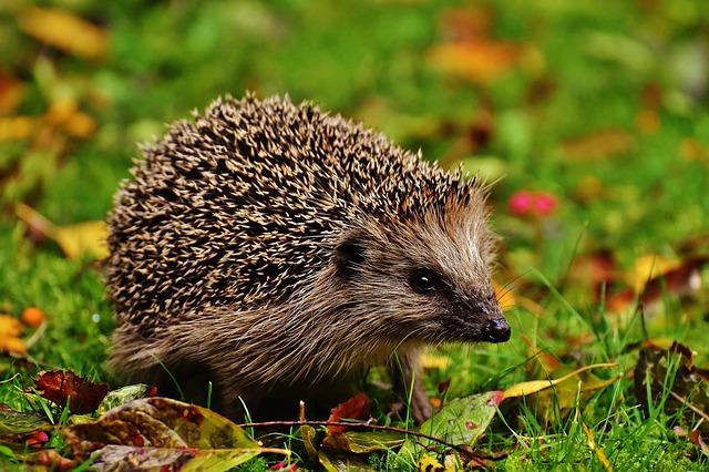 ratowanie-młodych-zwierzat Co zrobić, gdy znajdzie się małe zwierzę?