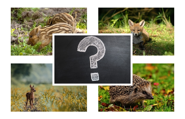 Co zrobić gdy znajdzie się małe zwierzę?