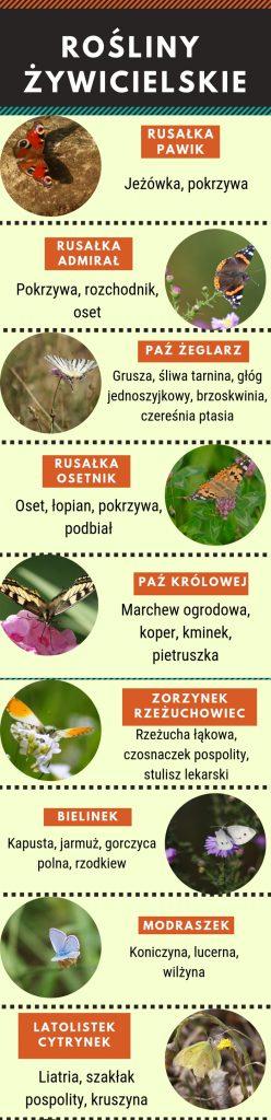 jak zwabić motyle do ogrodu - rośliny żywicielskie gąsienic