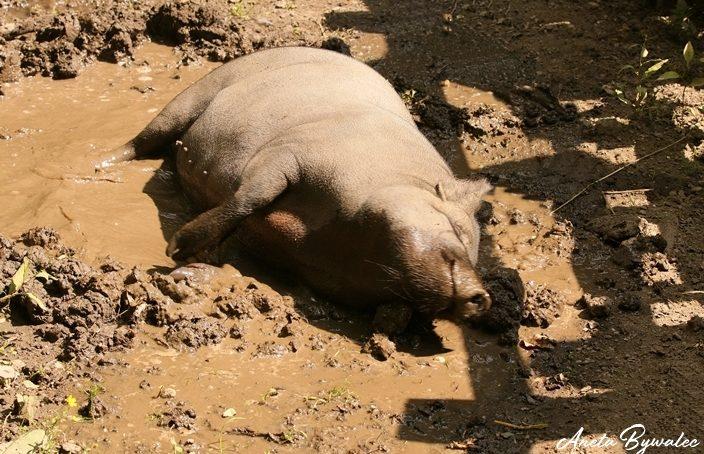 Jak zwierzęta radzą sobie z upałem?