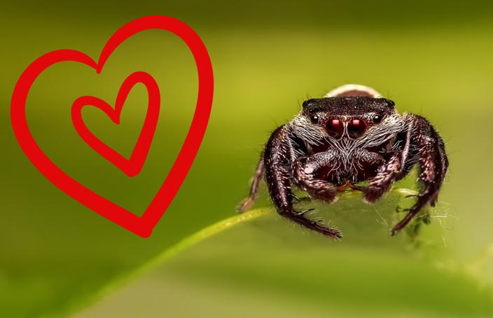 miłosne życie pająków