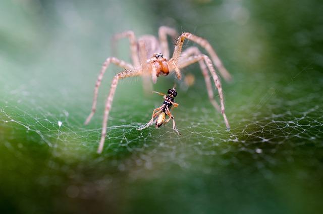 milosne-zycie-pajakow-podarunek Miłosne życie pająków