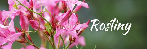 rośliny Wielki spis książek przyrodniczych