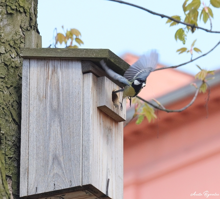 jesienne-porzadki-dla-przyrody-gniazda-003 Jesienne porządki z korzyścią dla przyrody