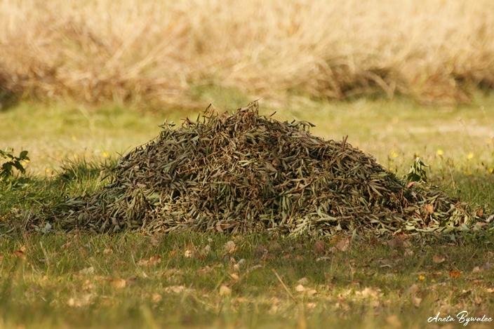Jesienne porządki dla przyrody - liście