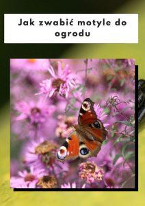 Jak zwabić motyle do ogrodu