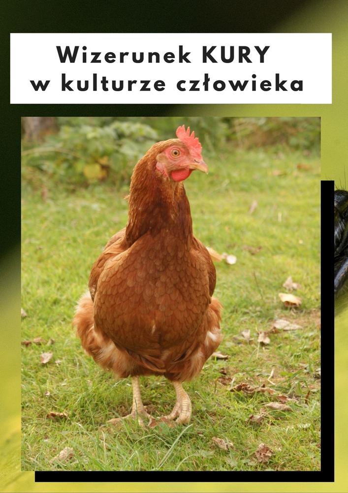 Wizerunek kury w kulturze człowieka