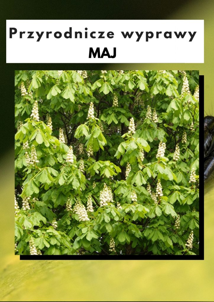 Przyrodnicze wyprawy - maj