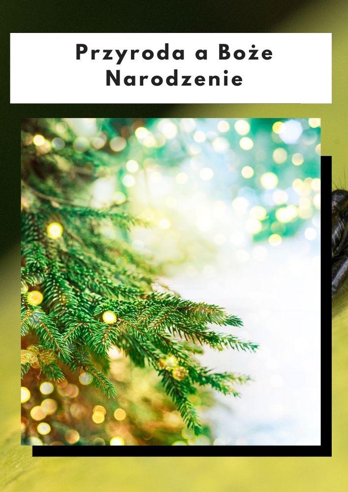 Przyroda a Boże Narodzenie