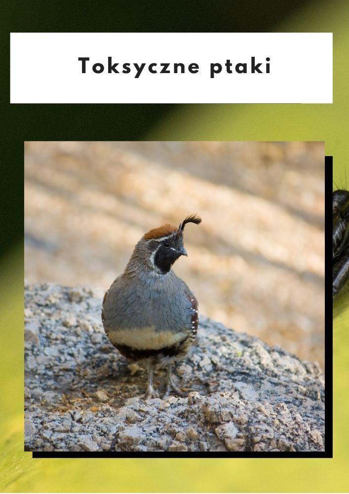 Toksyczne ptaki